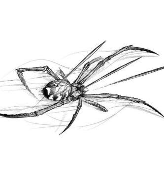 Araña: macho – hembra, ideas interesantes